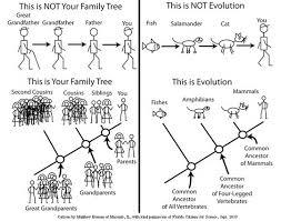 Family Tree Vs Phylogeny