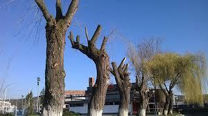 Peste un milion de arbori au fost tăiați în București în ultimii ani