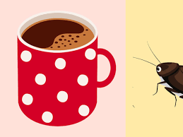 Roaches In Your Kitchen Check The Coffee Maker Kitchn
