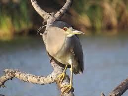 Shanna's Bird Menagerie - Home | Facebook