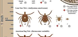 Cdc Tick Identification Chart Your Field Guide To Battle Ticks In Fairfax County