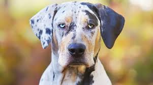 spotted dog breeds 21 diffe pups