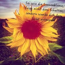 Sei Wie Die Sonnenblume Folge Nicht Dem Schatten Sondern Wende