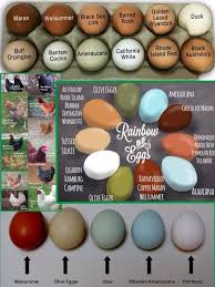 Cochin Chicken Color Chart Chicken Breed Egg Color Chart Chicken Breeds Raising