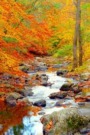 Fall Landscaping Best 25 Fall Landscape Ideas Only On Pinterest Seasons Fall