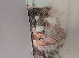 cleaning mold in bathroom walls beautiful 3 ways to clean black mold wikihow