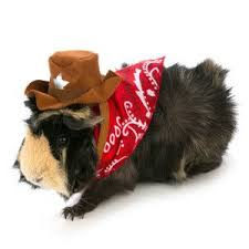 All Living Things Pet Halloween Cowboy Small Pet Costume