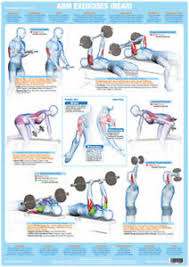 Details About Arm Muscles Back Weight Lifting And Bodybuilding Poster Gym Exercise Chart