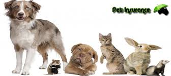 banner displaying best pet insurance reviews and quotes in australia