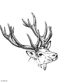 Dessin De Caribou A Imprimer Coloriage De Caribou L