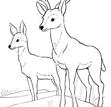 Coloring Pages Forest Animals Forest Animal Coloring Pages Forest Animal Coloring Pages Coloring