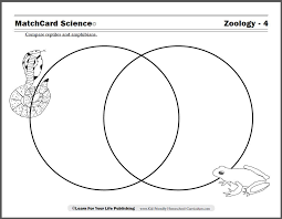 Difference Between Amphibians And Reptiles Venn Diagram Reptiles And Amphibians Worksheet