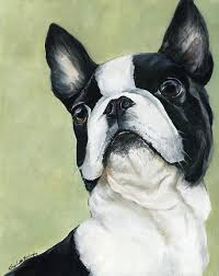 pet painting boston terrier by charlotte yealey