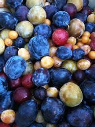 Pistachio  WikipediaFruit Salad Trees Usa