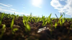 Image result for Soil Health