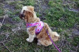 Dog Harness Pattern Best Kimono Dog Harness Pattern Tutorial Sew Mama Sew