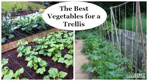 the best vegetables for a trellis for