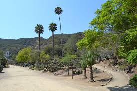 wrigley memorial and botanical garden attractions in catalina island catalina