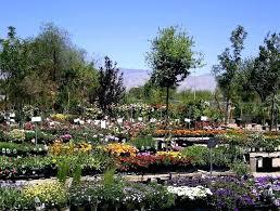 garden nurseries near me. Garden Nursery About Us Near Me Now . Nurseries T