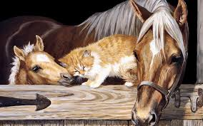beautiful baby horses wallpaper. Delighful Horses Horses Images Beautiful Horse HD Wallpaper And Background Photos With Baby Wallpaper