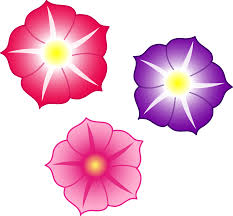 colored plant clipart three colorful petunia flowers