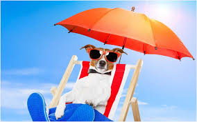 dog lounge chair really encourage dog lounge chair trends also cool with sungl relaxing on