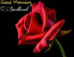 Good morning Images with Rose flowers ...