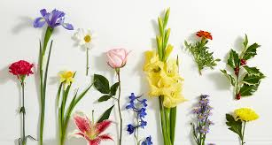 Month Flowers Chart Birthday Flowers By Month Proflowers Blog