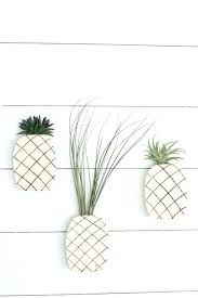 air plant wall art view in gallery hanger display holder mounted