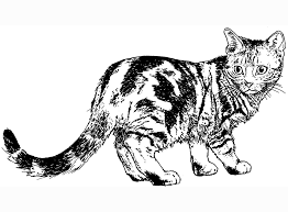 56 Cat Coloring Pages Realistic Cat Coloring Pages