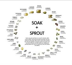 Soak And Sprout Chart Your Guide To Soaking Sprouting Whole Grains Beans Nuts