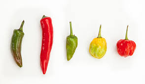 chili peppers. Delighful Peppers On Chili Peppers I