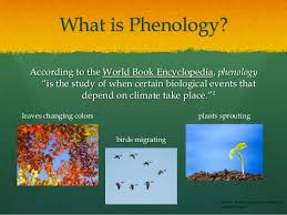 Phenology Chart Phenology Project