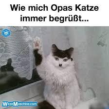 Opas Adolf Hitler Katze Lustige Katzenbilder Witzemaschine