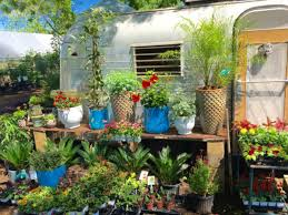 austin s best garden s for stylish succulents and all things green