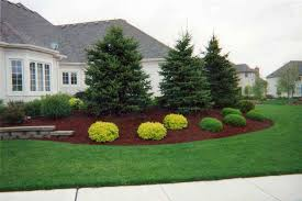 Landscaping: Ideas For Landscaping Under Evergreen Trees