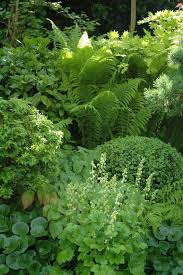 Small Picture Best 20 Ferns garden ideas on Pinterest Ferns Grasses and