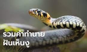 ฝันเห็นงู ฝันเห็นงูเห่า ทำนายฝันเห็นงู
