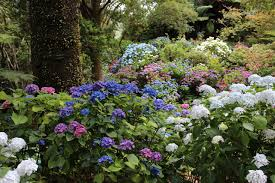 how to plant a flower garden. Best Fun In The Sun Hydrangeas To Grow Full Espoma Pics Of How Plant A Flower Garden