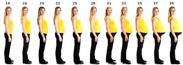 Pregnancy Stomach Measurement Chart Pregnancy Size By Week Lovetoknow