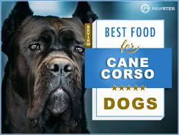 Cane Corso Weight Chart Pounds 6 Best Foods To Feed Your Puppy And Adult Cane Corso In 2019