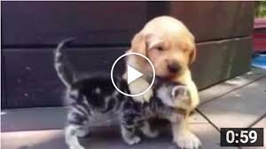 puppy and kitten are best friends shelter cats and kittens