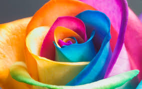 colorful rose wallpapers. Simple Wallpapers AmazingWallpapers2484 Wallpaper On Colorful Rose Wallpapers O