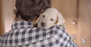 Budweiser Designated Driver Commercial Video Budweiser Puppy Shows The Cute Side Of Responsible Drinking