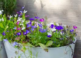 low maintenance plants for outdoor pots