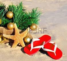 Christmas Palm Trees Palm Tree With Christmas Lights Lillyholiday Christmas Tree Hawaii