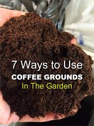 here are 7 ways how to use coffee grounds in your garden you may be amazed at how versatile this item is