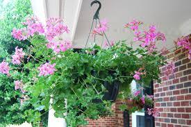 office decor stores. Splendid Flowers Names Home Decor Um Plant Decor_flower Decor_home Office Pinterest Ideas Linon Cheap Stores Liquidators Catalog.