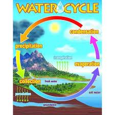 Chart The Water Cycle Water Cycle Water Cycle Chart
