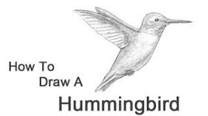 hummingbirds and flowers drawing. Wonderful Hummingbirds Intended Hummingbirds And Flowers Drawing T